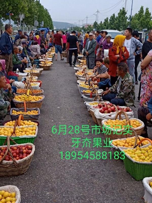 香蜜杏市场实记