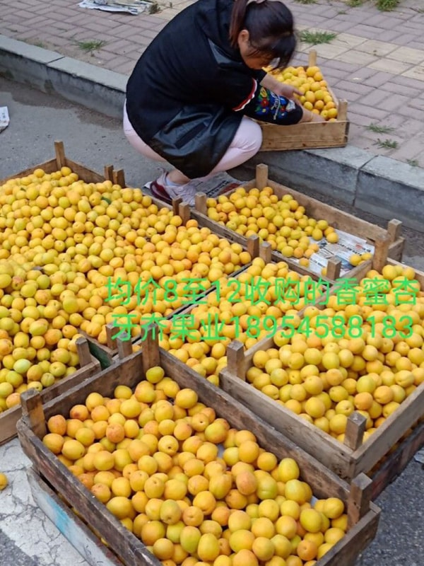香蜜杏市场