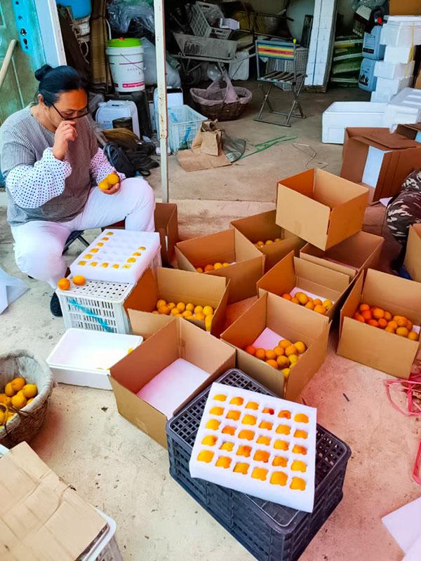 香蜜杏成果装箱